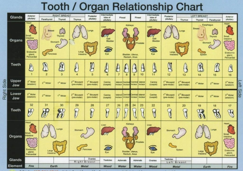 Top Beverly Hills Dentist Tooth Chart